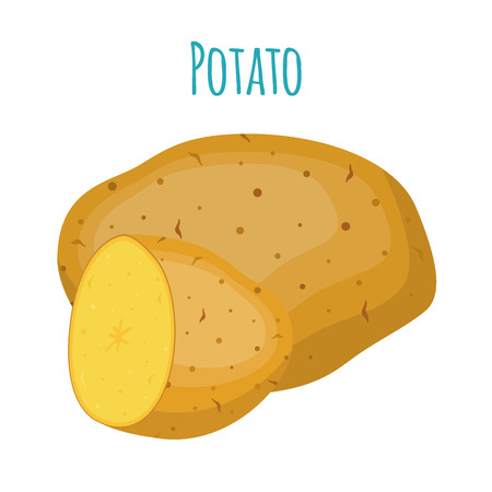 Potatoes set, brown tasty vegetable. Organic food. Made in cartoon flat style. Vector illustration