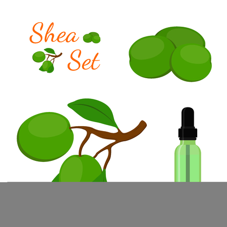 treatment plant: Shea cosmetics organic plant, oil in bottle. Nut tree. Cosmetic ingredient. Made in cartoon flat style. Vector illustration Illustration