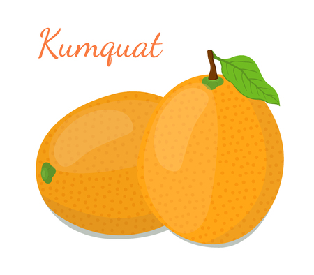 Tropical kumquat set, exotic fruit. Vegetarian nutrition. Made in cartoon flat style. Vector illustration