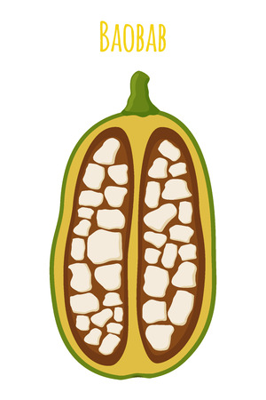 Baobab, organic nutrition, exotic detox fruit. Made in cartoon flat style. Vector illustration Illustration