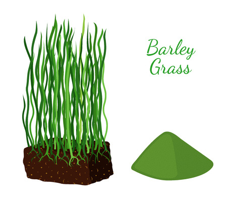 Barley grass and wheat made in cartoon flat style.