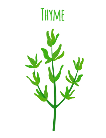 Thyme, organic spice, vegetarian nutrition. Made in cartoon flat style. Vector illustration
