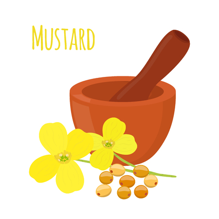 Mustard, seeds with mortar, pestle. Vegetarian food, organic nutrition. Made in cartoon flat style. Vector illustration
