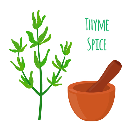 Thyme, organic spice, vegetarian nutrition, mortar, pestle in cartoon flat style.
