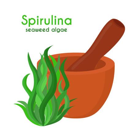 Spirulina, algae, seaweed with pestle, mortar. Made in cartoon flat style. Vector illustration