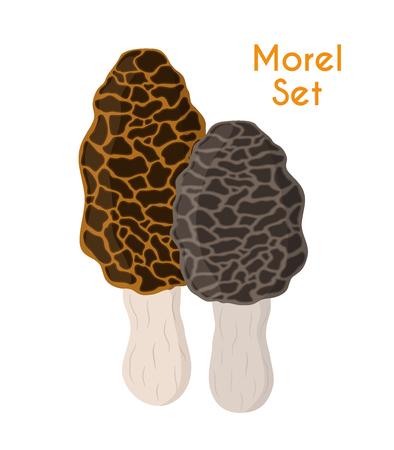 Edible mushrooms in cartoon flat style