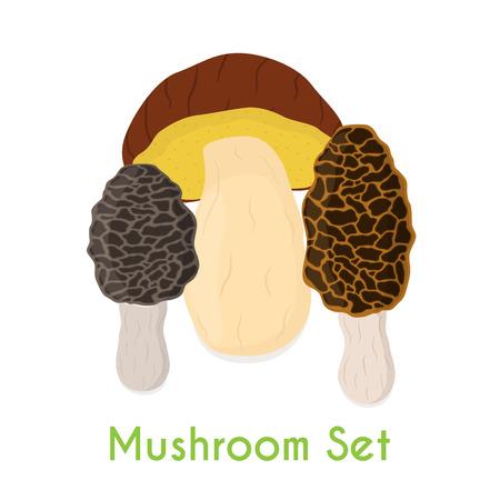 Edible mushroom, bolete, morel mushrooms, made in cartoon style, illustration, 向量圖像