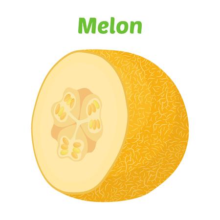 Yellow ripe melon. Organic fresh fruit. Made in cartoon flat style. Vector illustration