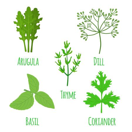 Herbal set, condiment, spice. Arugula, coriander, thyme, basil, dill. Made in cartoon flat style. Vector illustration Иллюстрация