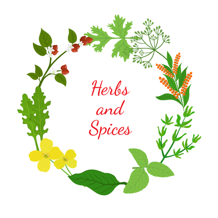 Herbs and spices leaves set. Made in cartoon flat style illustration.