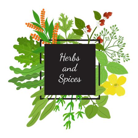 Herbs, spices arugula, mustard, basil, thyme, quinoa, buckwheat, dill. Made in cartoon flat style vector illustration.