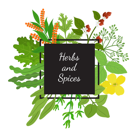 Herbs, spices arugula, mustard, basil, thyme, quinoa, buckwheat, dill. Made in cartoon flat style vector illustration.