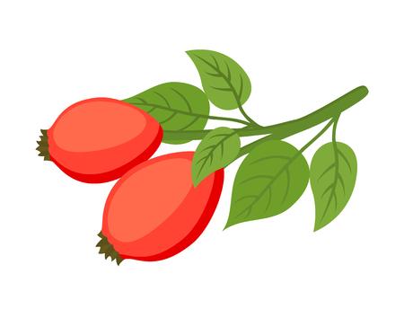 Vector rose hip, rose haw, medical herbal plant. Organic vegetarian briar for tea, medicine, cosmetics. Made in cartoon flat style