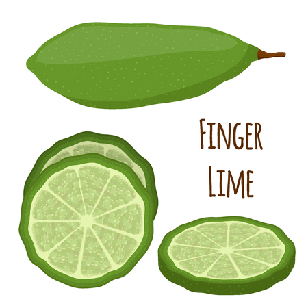 Vector illustration of Australian finger lime, slices of tropical, exotic plant, spicy food. Made in cartoon flat style