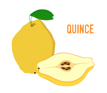 Vector set of yellow fruit - quince. Tasty sliced food, vegetarian plant. Made in cartoon flat style.