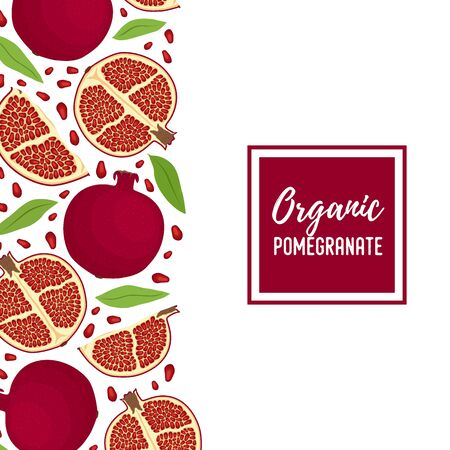 Vector pomegranate ad banner, promo poster with red exotic fruit in cartoon flat style. Background, decoration line