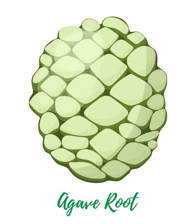 Vector agave root in cartoon flat style