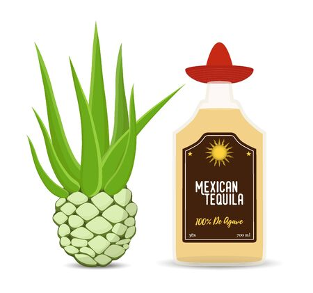 Vector set of Mexican tequila - glass bottle with agave root. Alcohol drink and tropical plant. Cartoon flat style.
