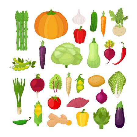 Vector collection of vegetables - corn, pumpkin, potato, tomato and others. Organic vegetables in cartoon flat style. Vegetarian concept.