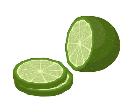 Vector slices of green lime and whole fruit in cartoon flat style. Citrus plant, vitamin nutrition.
