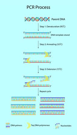 Polymerase chain reaction or PCR is a technique to make many copies of a specific DNA region in laboratory