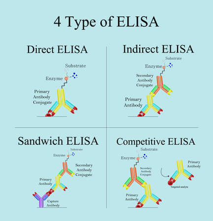 4 type of ELISA in laboratory, Direct, Indirect, Sandwich and Competitive ELISA. Biotechnology immunoassay