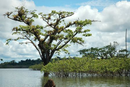 Laguna Grande on Cuyabeno River,Ecuador