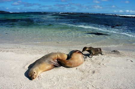 Sea Lions on Loberia beach,Galapagos