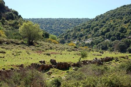 galilee: Upper Galilee landscape.
