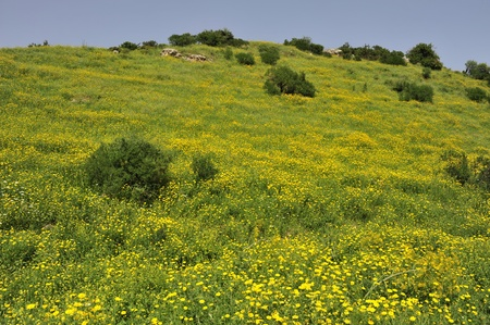 galilee: Spring blossom in Galilee, Israel. Stock Photo