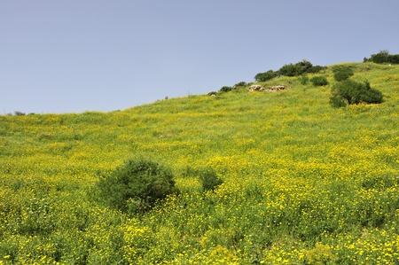 Fresh greenery on hills of Galilee, Israel