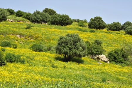 Spring in Galilee, Israel. Stock Photo