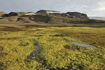 Highland tundra landscape in Iceland  Stock Photo