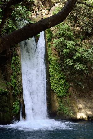banias: Hermon stream in Banias National park, Israel.