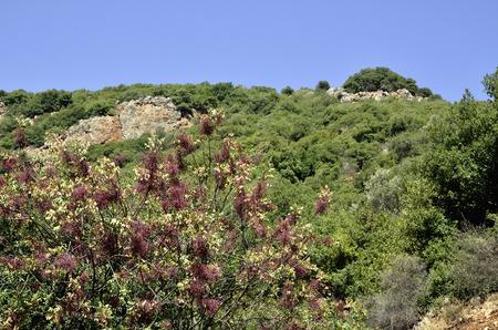 banias: Summer landscape in Banias National park, North of Israel