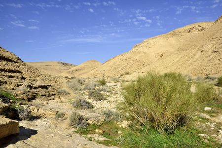 Negev desert landscape in winter season, Israel.