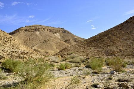 nahal: Wadi Zafit winter landscape in Negev desert.