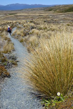 tongariro national park: Hiking path in Tongariro National Park, New Zealand. Stock Photo