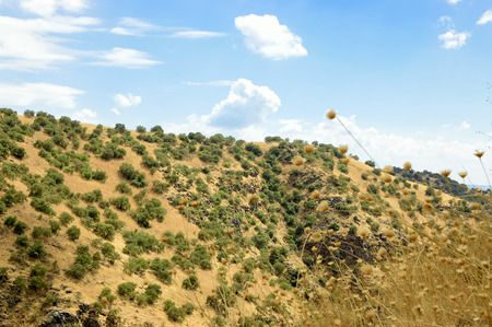 in the heights: Summer scenic view of Golan Heights.