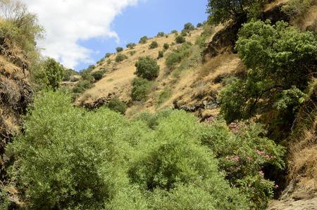 the golan heights: Deep ravine on Golan Heights plateau.