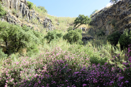 the golan heights: Green jungle in Golan Heights gorges, Israel