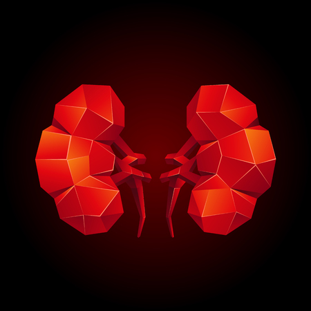 Red low poly human kidneys on a black background. Abstract anatomy organ. Kidneys in 3D polygon style.