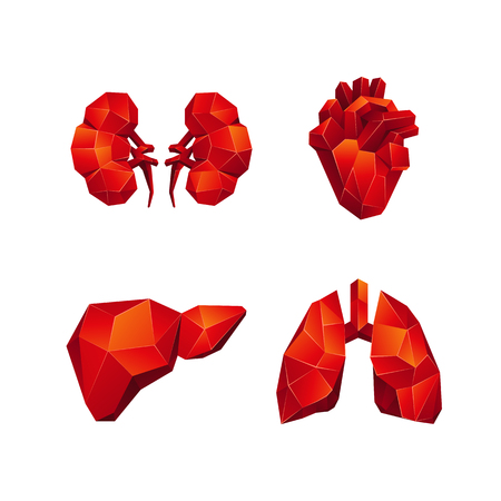 Red low poly human internal organs set on a white background. Abstract anatomy organ, such as the heart, lungs, liver and kidneys in 3D polygon style.