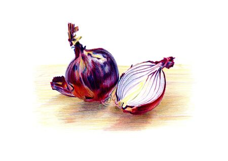 Freehand color pencil drawing of one whole and a halved red onion. Drawn from still life. Artistic and observational illustration for organic, vegan, vegetarian cuisine, bio food, cooking ingredient.