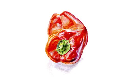 Freehand observational color pencil drawing from life of one single red bell pepper with shadow isolated on white. Closeup artistic sketch of capsicum. Illustration for organic food, vegan cuisine. Banco de Imagens