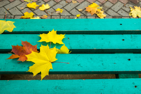 Yellow and red maple leaves on turquoise painted old wooden bench in public park. Autumn day. Autumn mood.