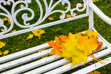 Autumn maple leaves on wooden bench in park. Forgotten bouquet of bright colorful red, orange, yellow leaves. Autumn colors in nature of Europe and America. Horizontal image with selective focus.