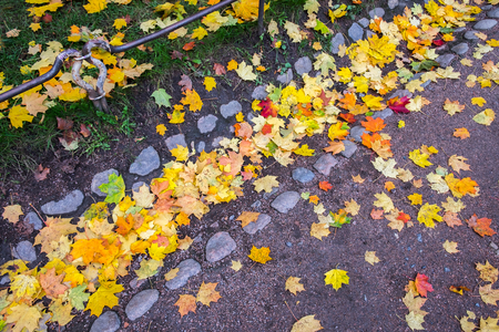 Colorful red, yellow, orange maple leaves in old drainage ditch. Multicolored foliage covering green grass and asphalt footpath. Natural background. Autumn colors in nature of Europe and America.