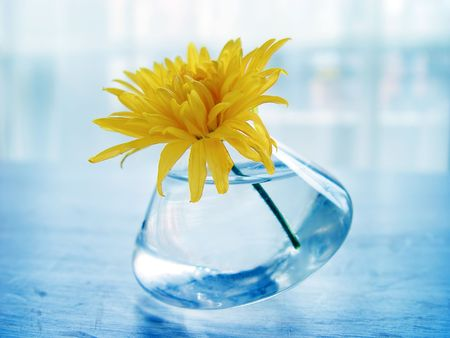 largely: Yellow flower on blue background in restaurant