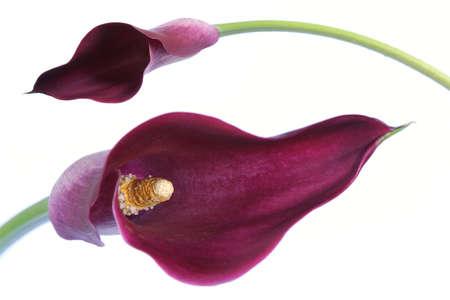 エキゾチックな花の詳細との分離の白背景